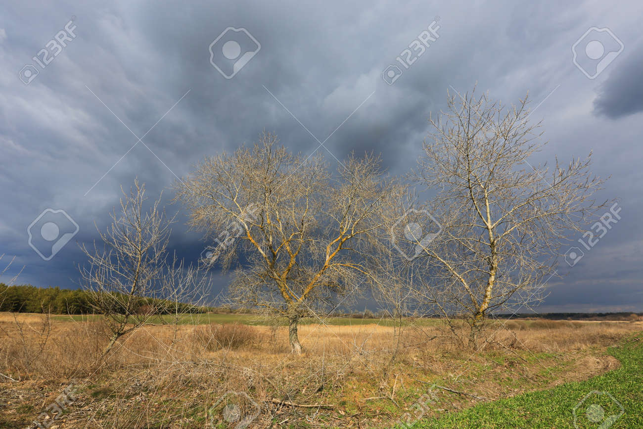 leafless trees in spring time near farming field under thunderstorm clouds in sky - 168208813