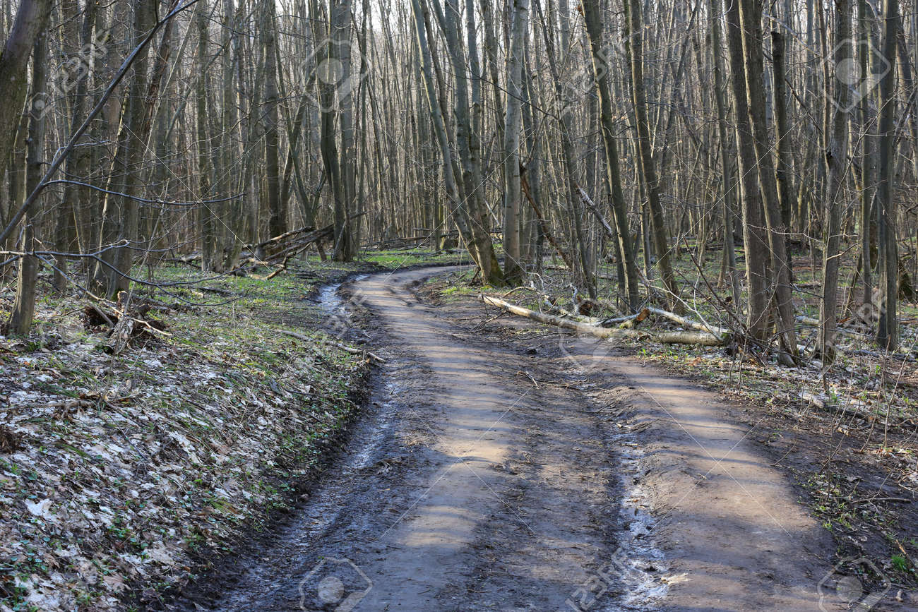 Rut road turn un spring forest - 168208846