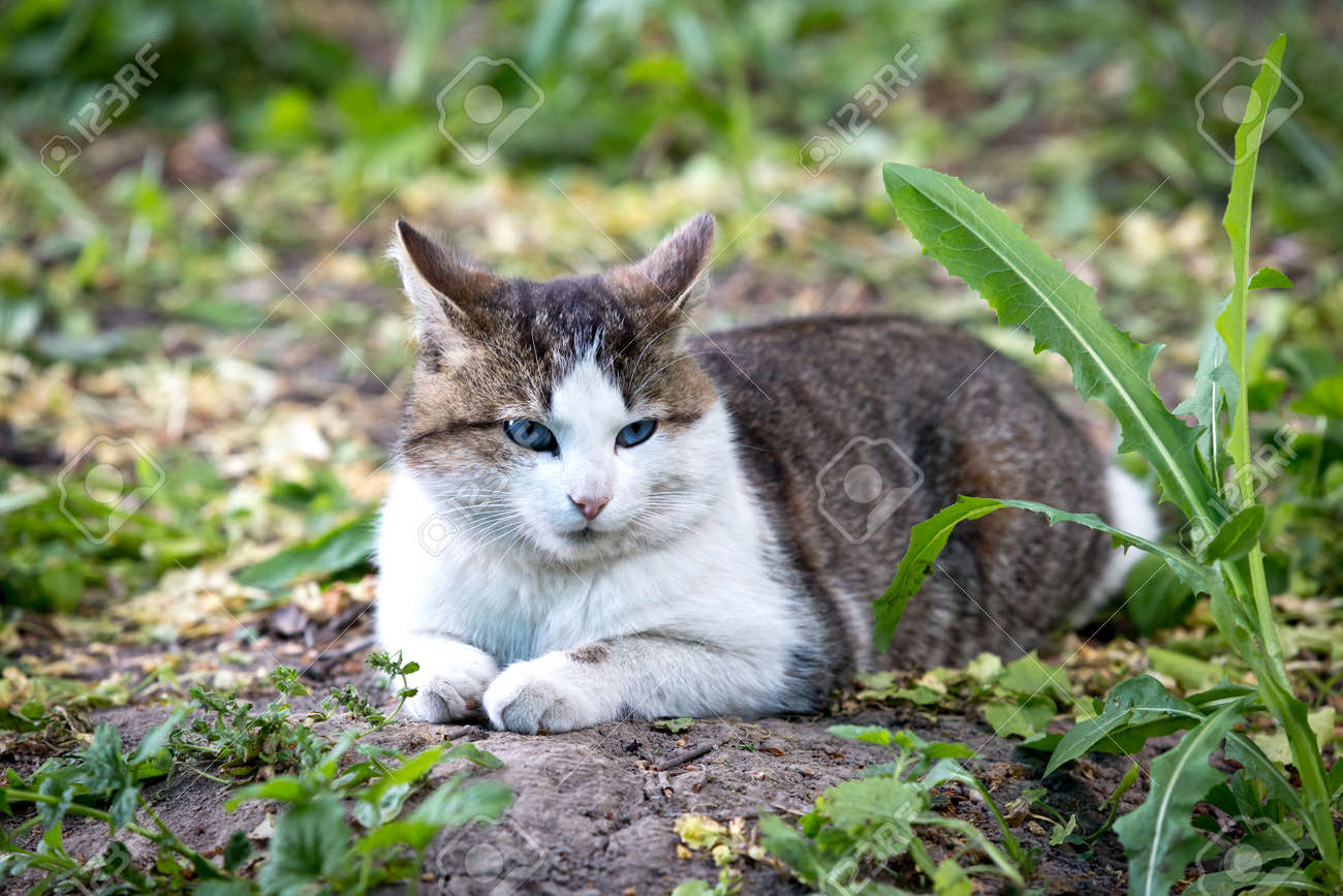 cat laying on ground among green plants - 168208868