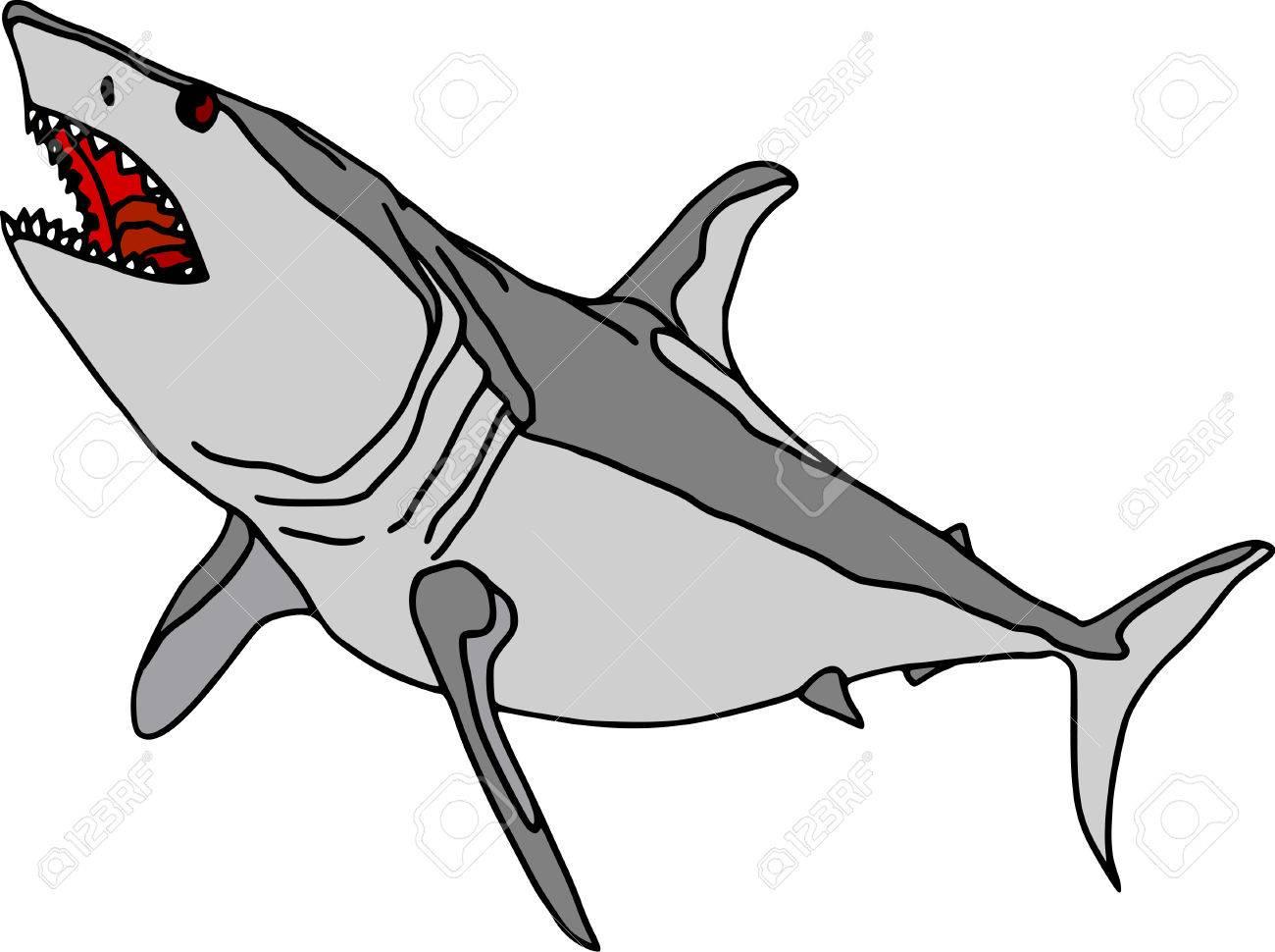 vector  -  shark  isolated on white background Stock Vector - 3759836