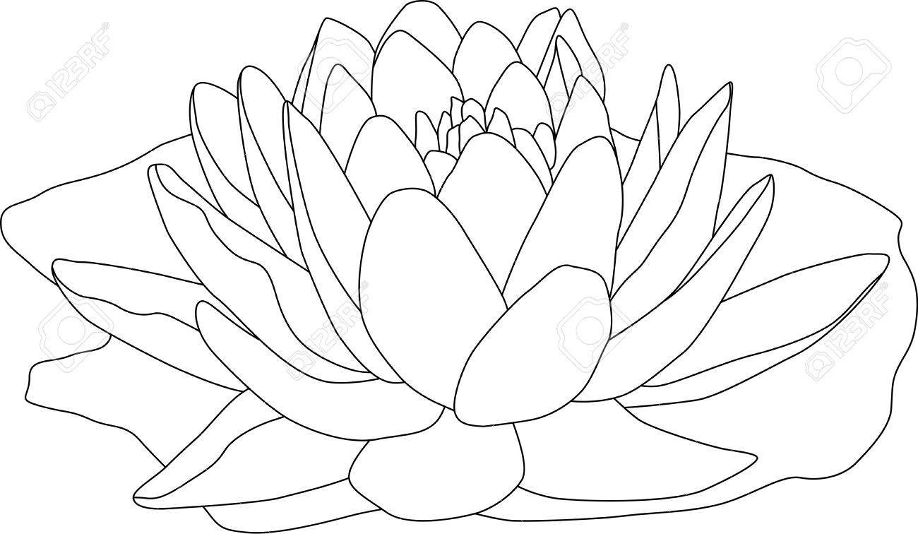 vector - contour waterlilly isolated on white background Stock Vector - 4921112