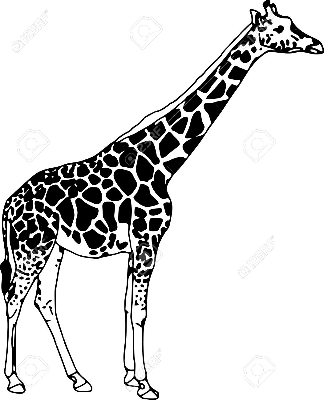 vector - contour giraffe isolated on white background Stock Vector - 4984256
