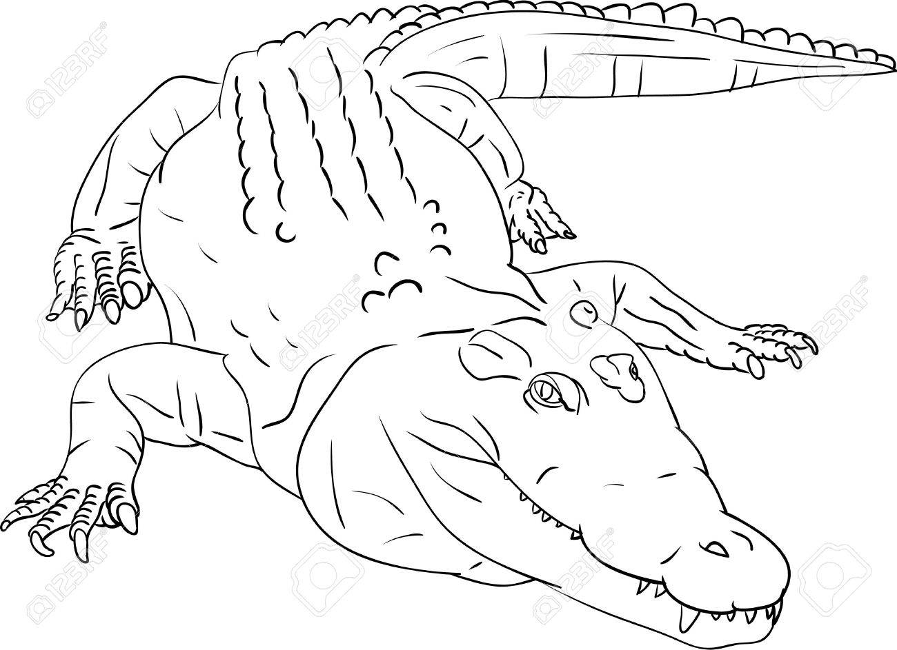 Alligator Drawing Outline Alligator Drawing Outline