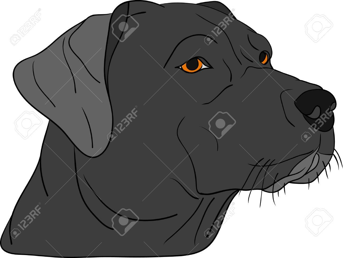 vector - dog head isolated on background Stock Vector - 5752435