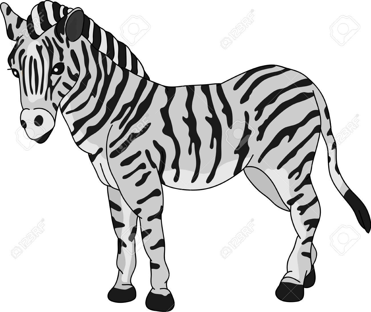 zebra standing isolated on background Stock Vector - 7454395