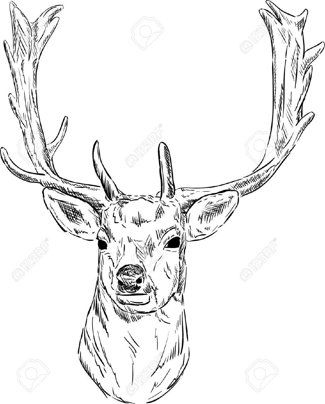 fallow deer vector portrait fallow deer isolated on background illustration