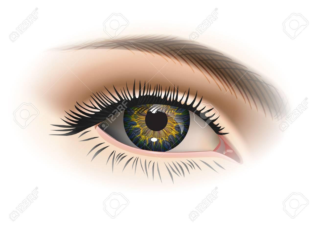 Female eye closeup. Vector - 40457147