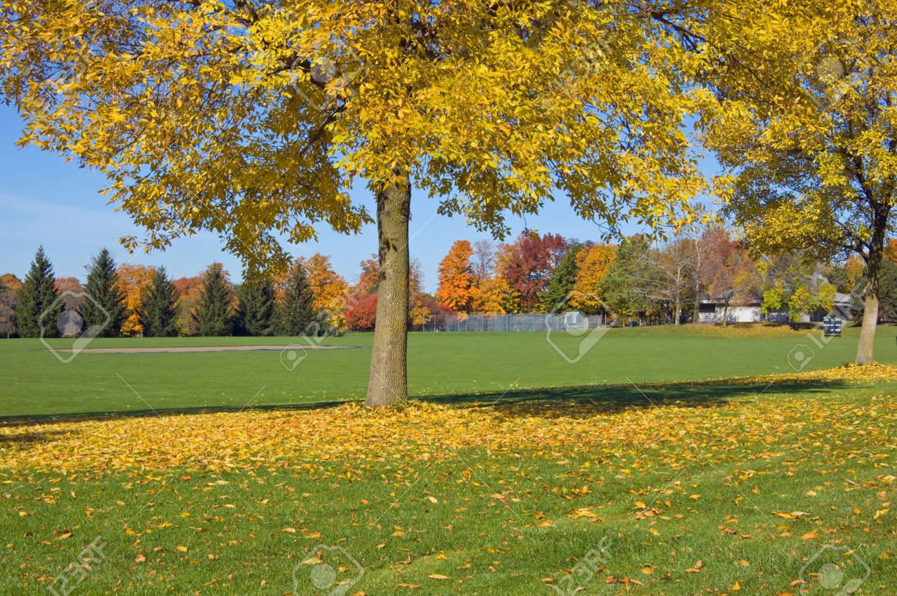 Green Grass And Colorful Trees In One Of Toronto Park Stock Photo ...