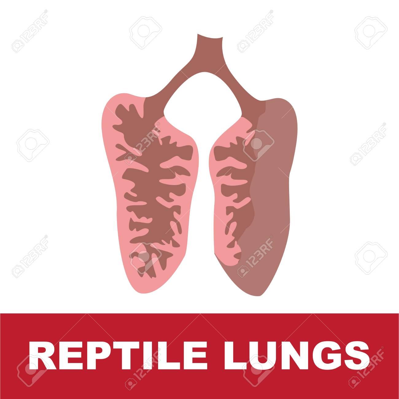 Tolle Lungen Anatomie Ppt Ideen - Anatomie Von Menschlichen ...