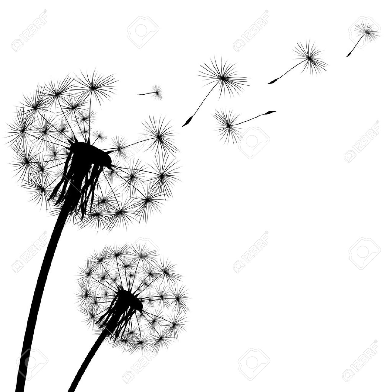black silhouette with flying dandelion buds on a white background - 50512874