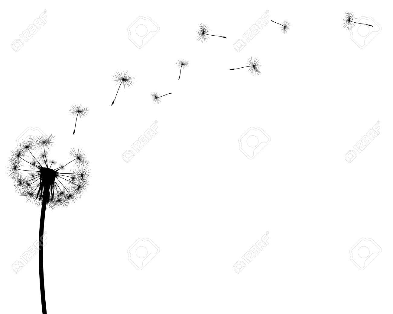 black silhouette with flying dandelion buds on a white background - 50904329