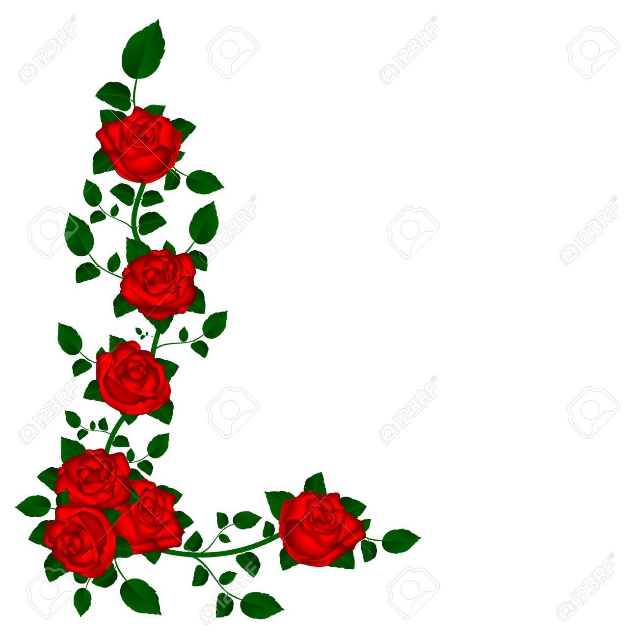Enredadera De Rosas Ilustración Vectorial Rojo De Las Flores