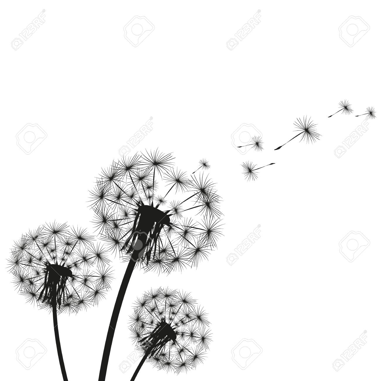 Silhouette of a dandelion - 93626632