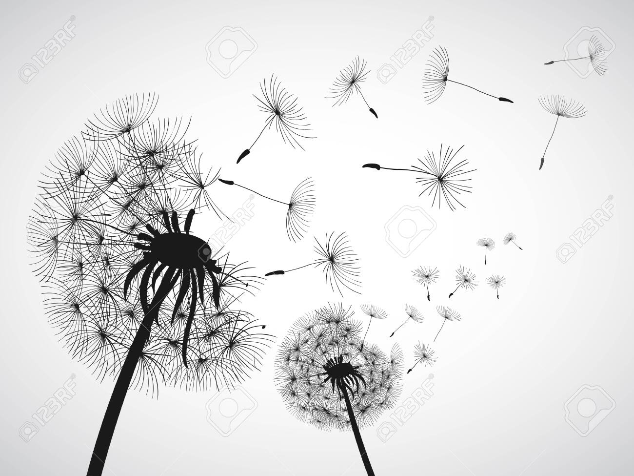 Abstract black dandelion, dandelion with flying seeds - for stock vector - 158147815