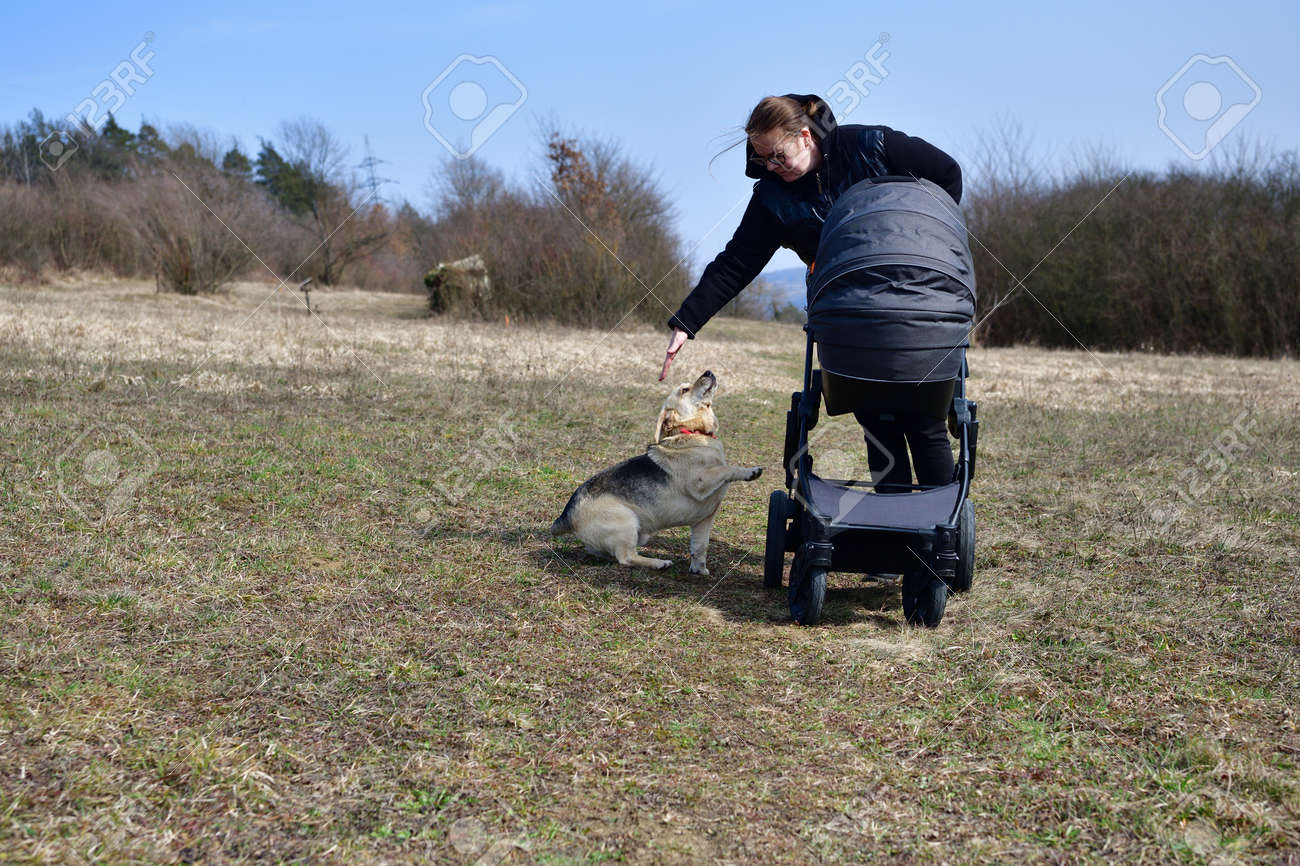 A woman in a black coat prams a child in a baby stroller on a large meadow with dog running beside - 168381746