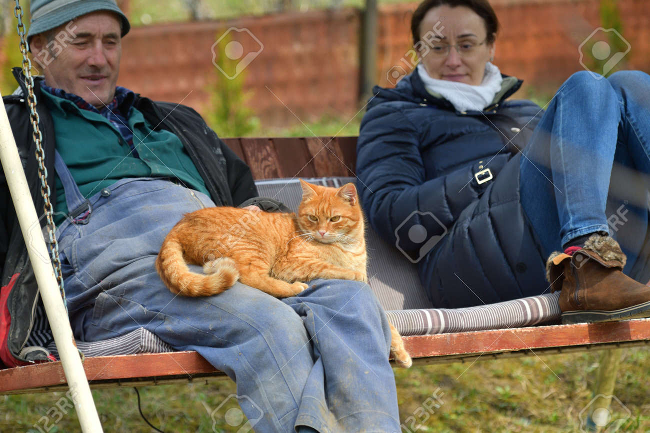 People sit on a swing with cats on their knees - 170150045