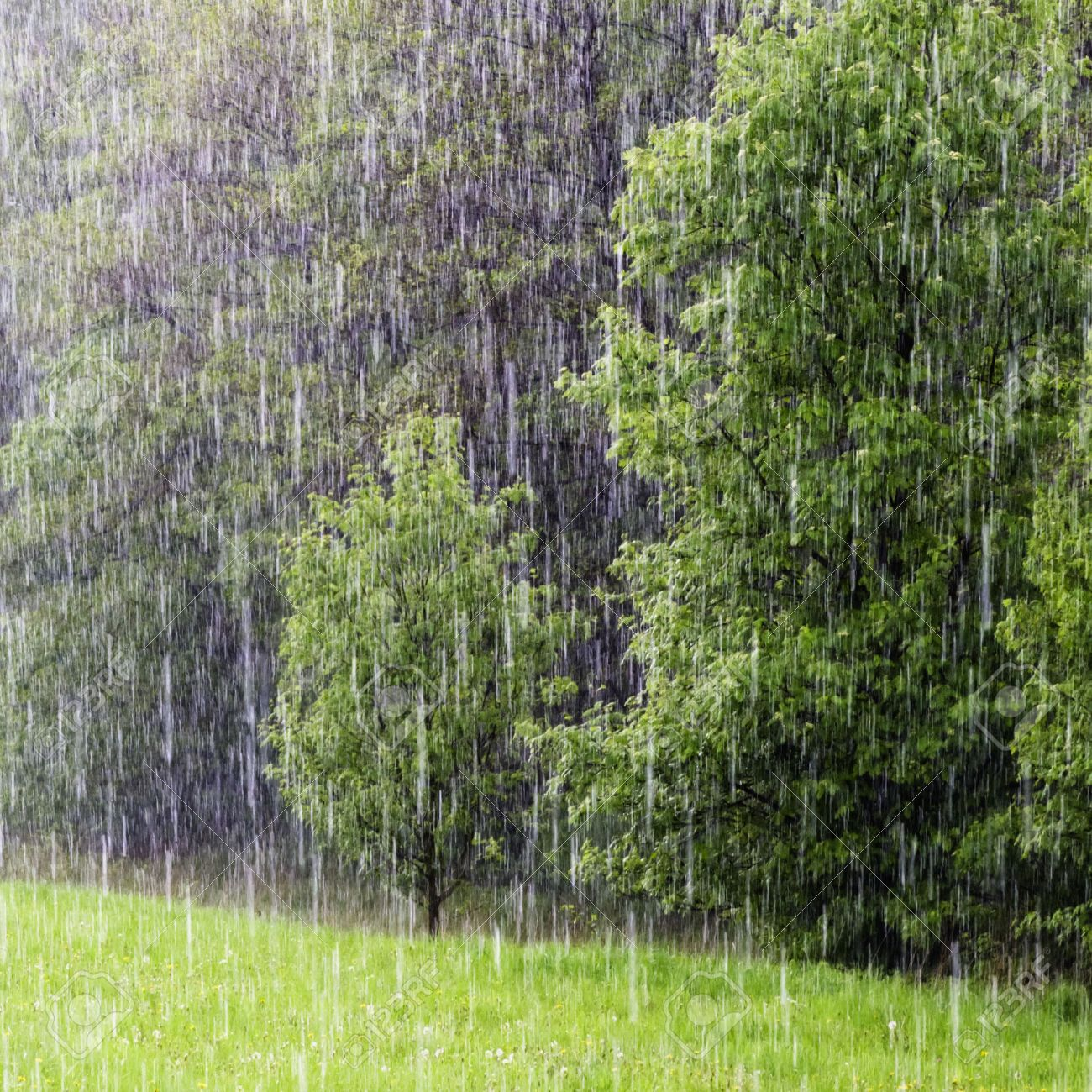 heavy shower stock photos u0026 pictures royalty free heavy shower