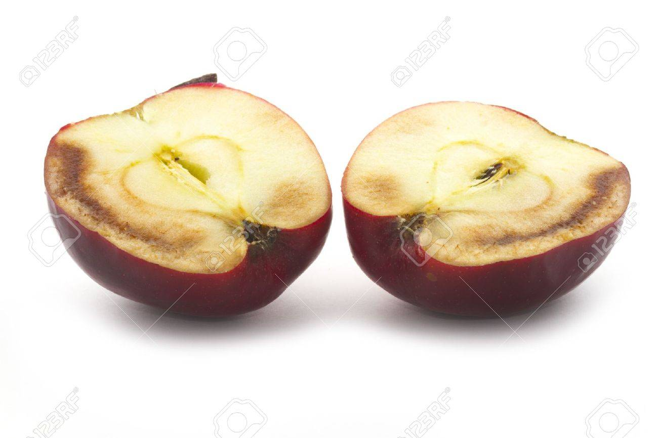 cross secttion of decaying apple isolated on white Stock Photo - 18069043
