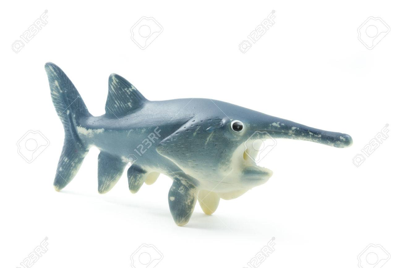 Single Rubber Toy Fish Isolated On White Background Stock Photo ...