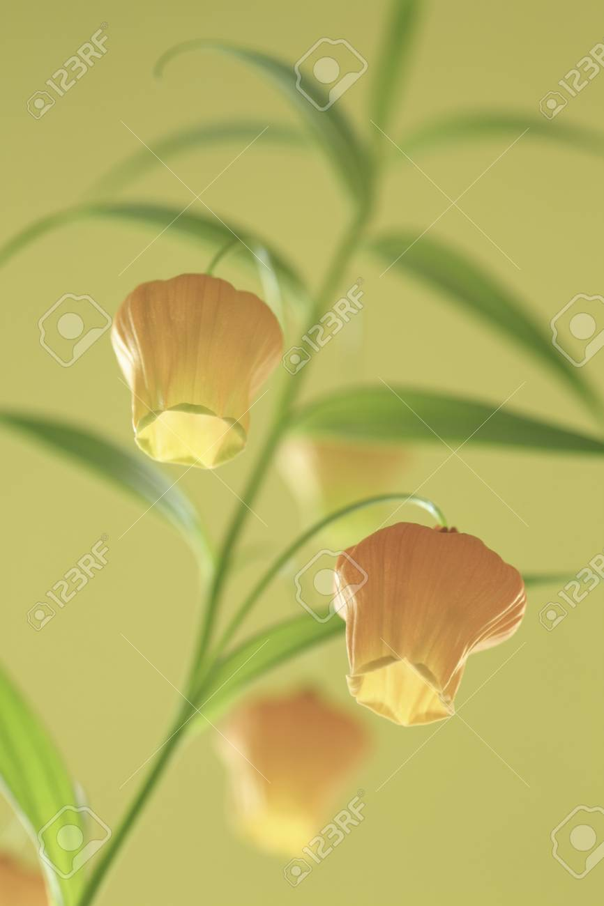 Bell Shaped Flowers Stock Photo Picture And Royalty Free Image