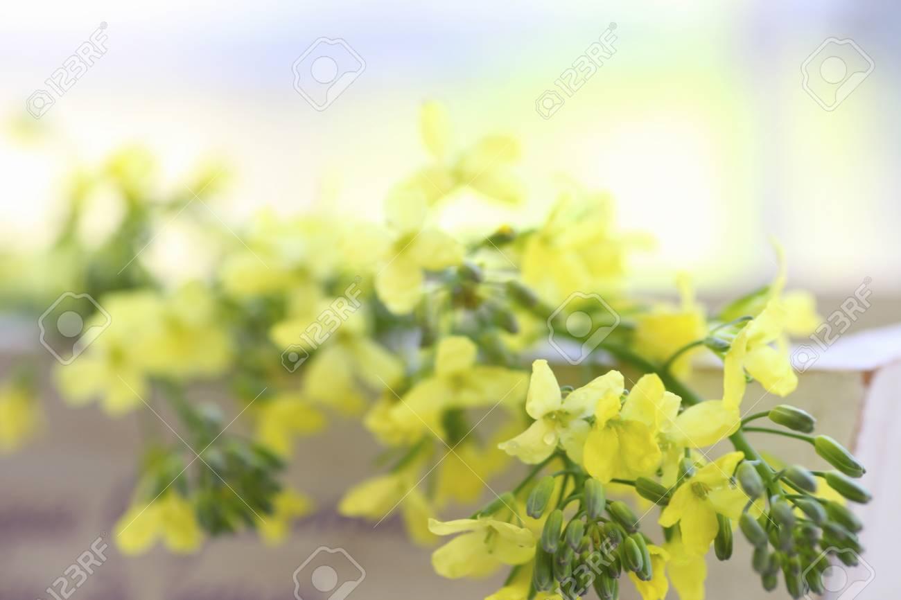 Yellow flowers of broccoli stock photo picture and royalty free stock photo yellow flowers of broccoli mightylinksfo