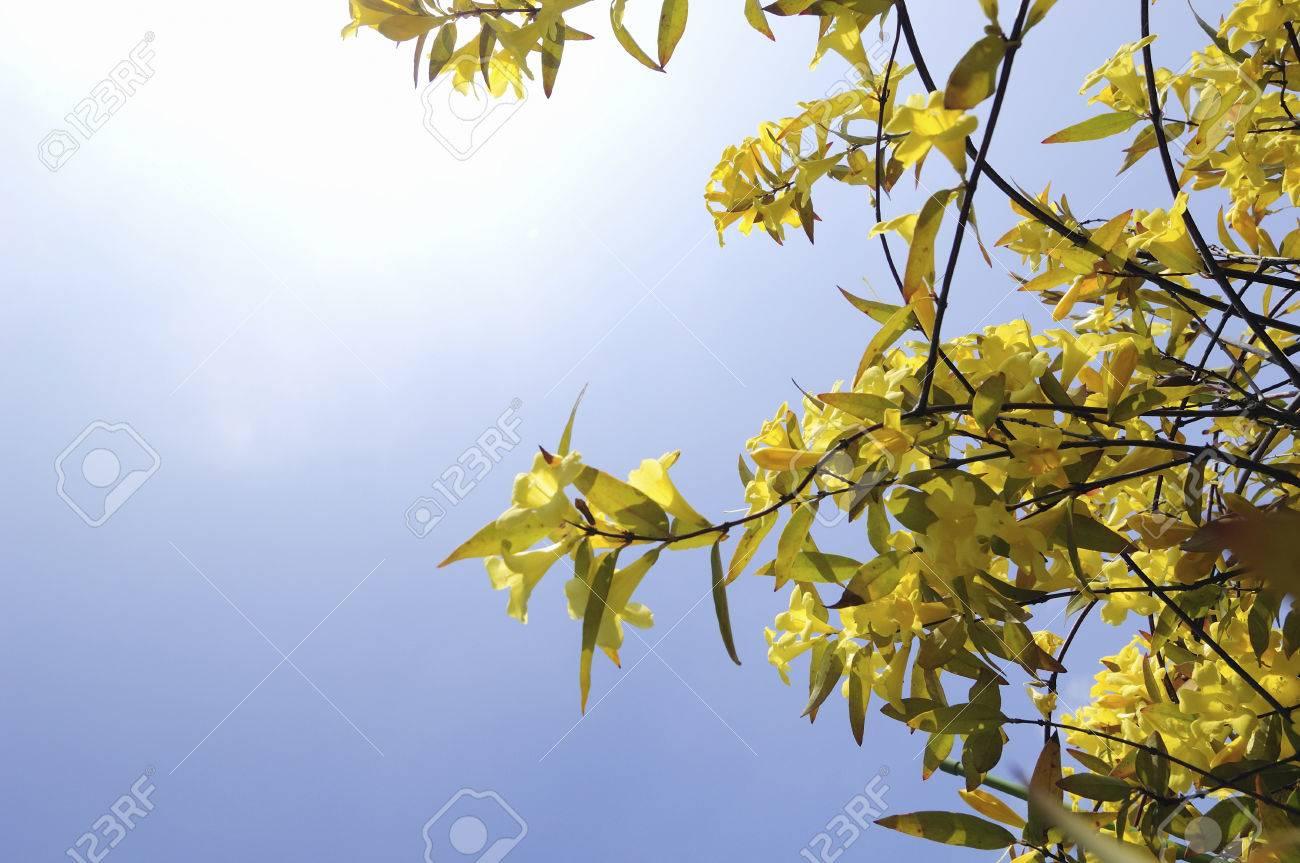 Blue sky and carolina jasmine flowers stock photo picture and blue sky and carolina jasmine flowers stock photo 46825224 izmirmasajfo