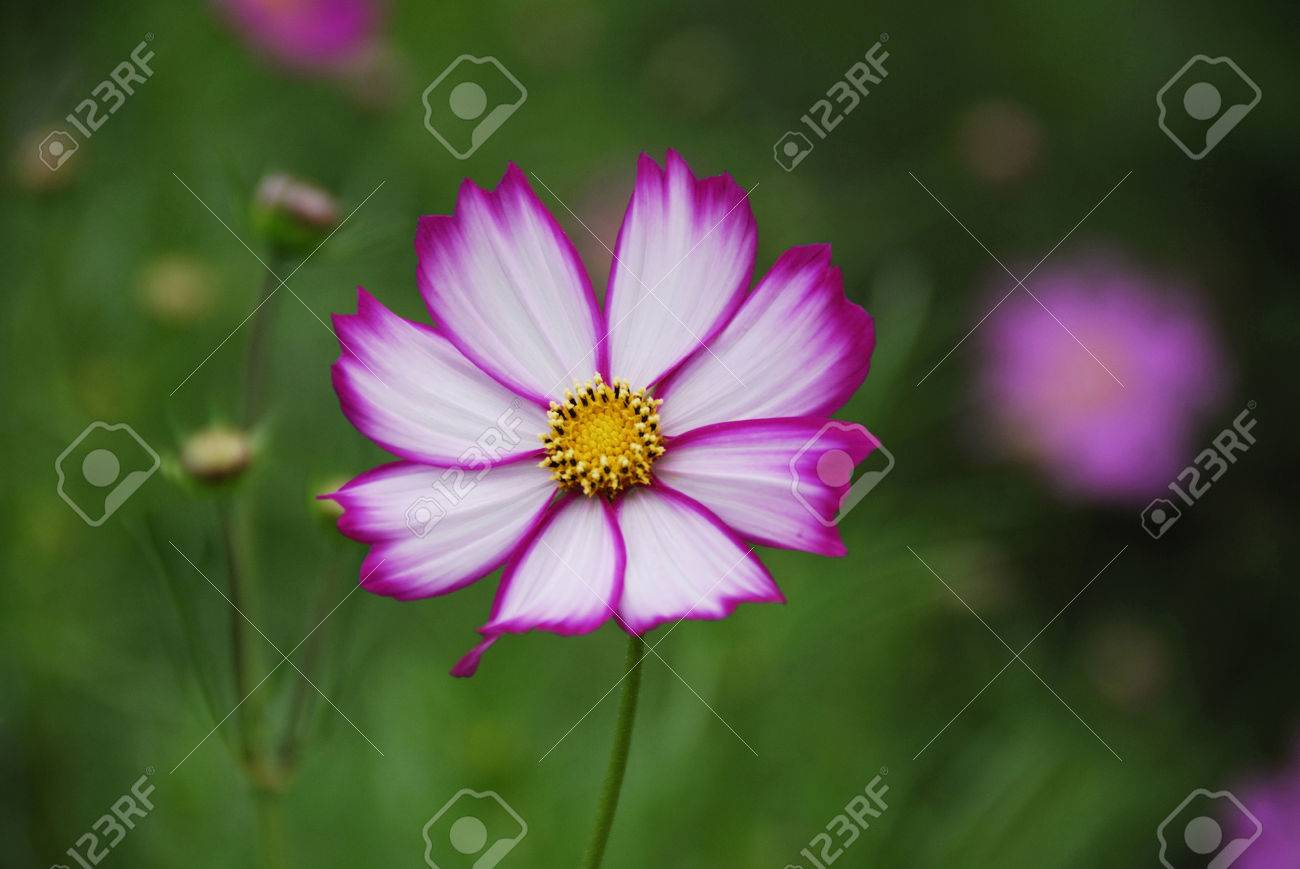 Autumn Flowers Stock Photo Picture And Royalty Free Image Image