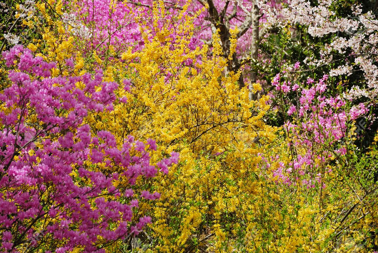 Spring Flowers Stock Photo Picture And Royalty Free Image Image