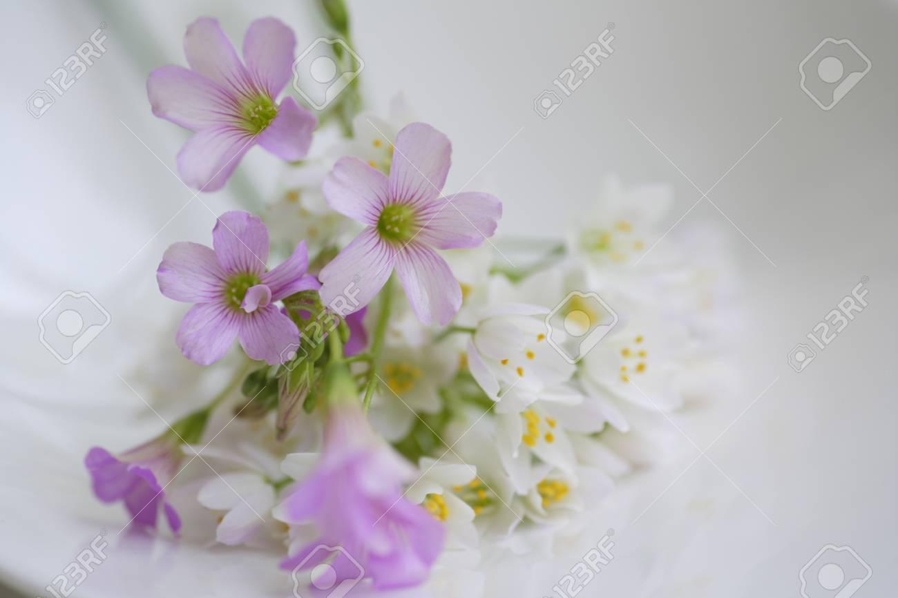 petite fleur arum et okisaris bouquet banque d'images et photos