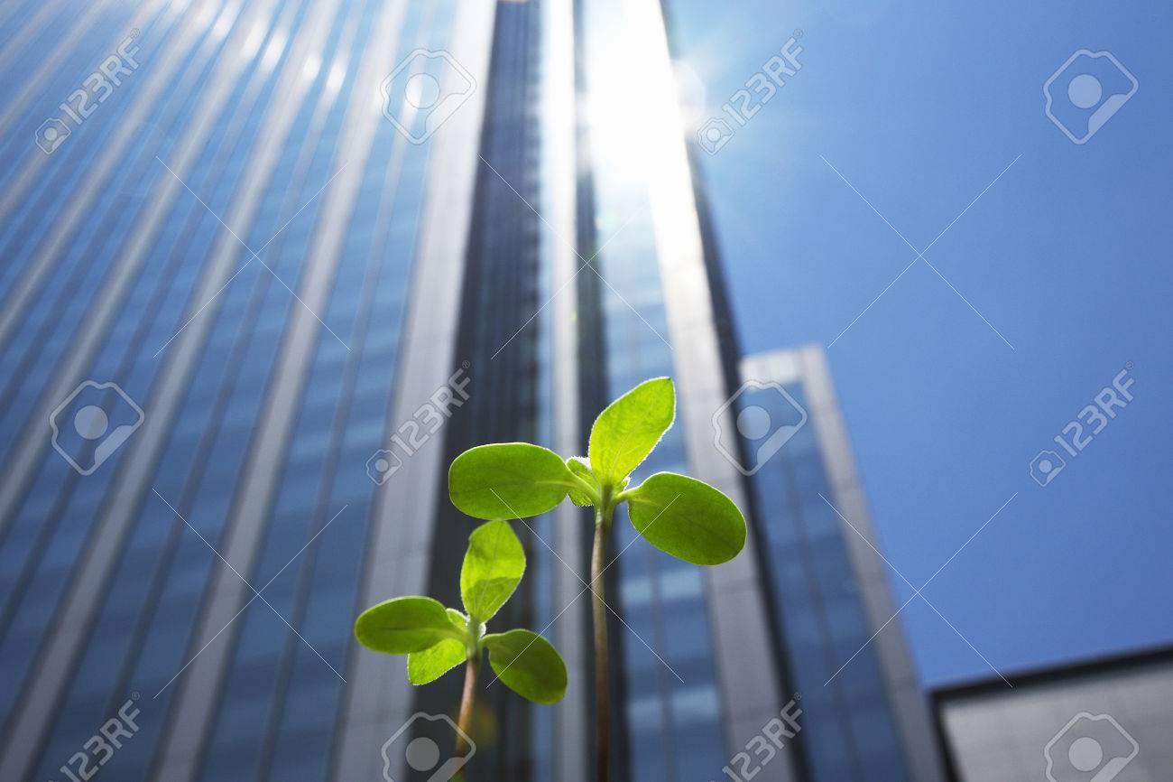 High rise buildings and new shoots Standard-Bild - 50081810