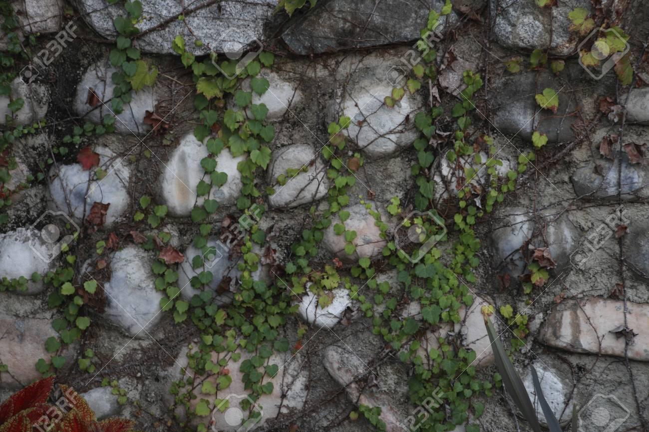 Ivy Stone Nude Photos 73