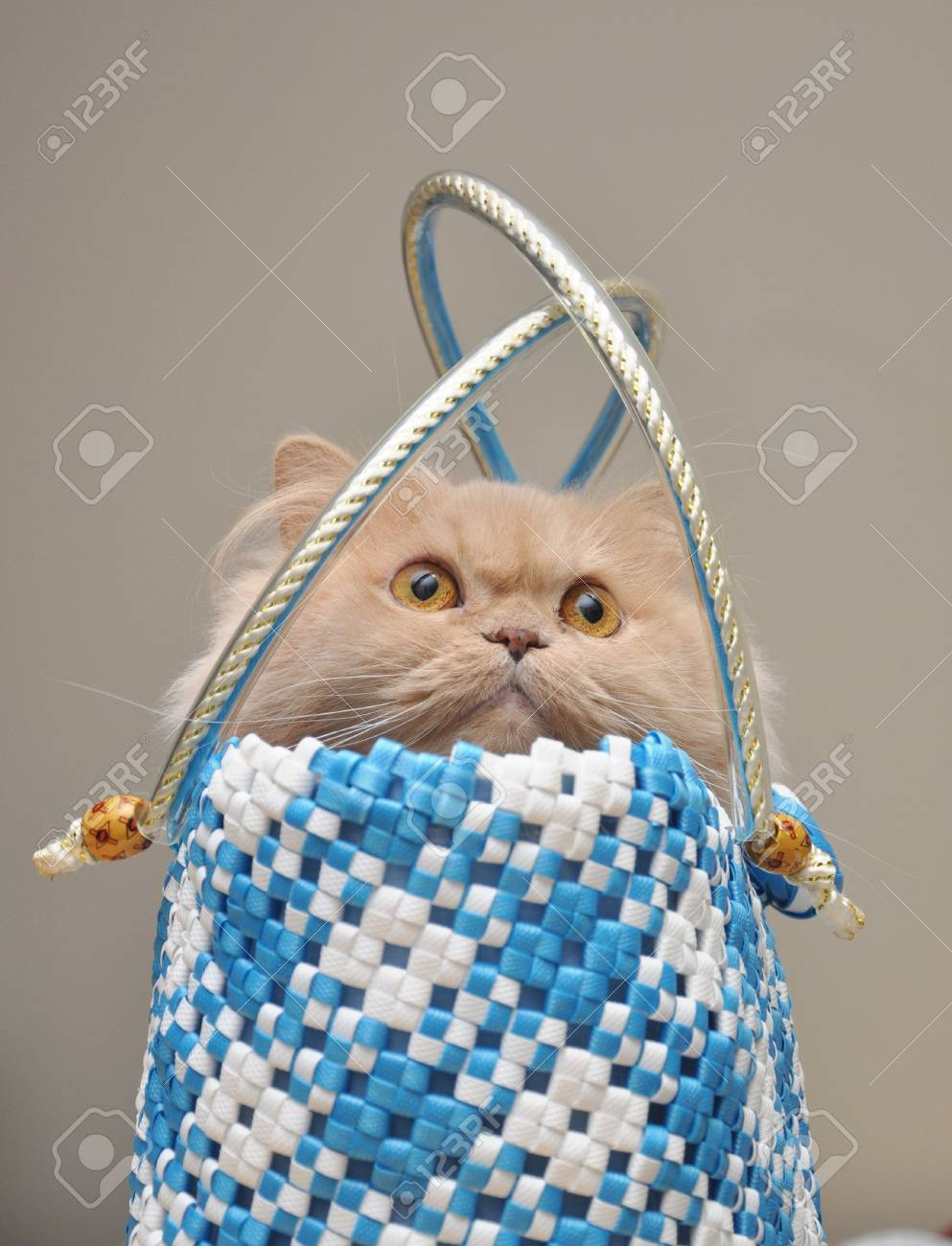 Cat hides into the bag Stock Photo - 6893396
