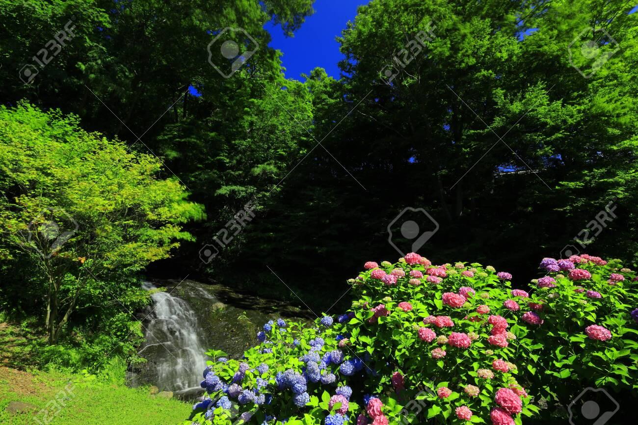 Mizucar Hut and Hydrangea, Kitakami City, Iwate Prefecture - 128041393