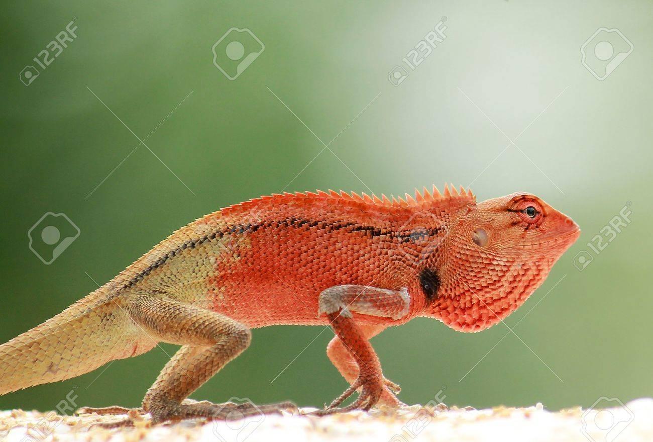 I am dinosaur junior Stock Photo - 15252563