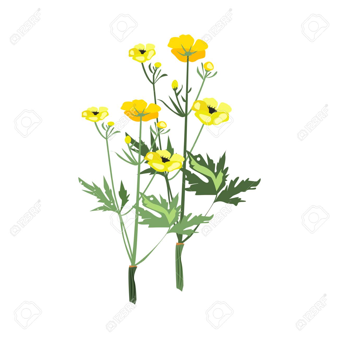 0f294b81bd150 Vector - Yellow flowers illustration. Flower, plant, nature. Spring  concept. Vector illustration can be used for topics like garden, field  flowers, nature