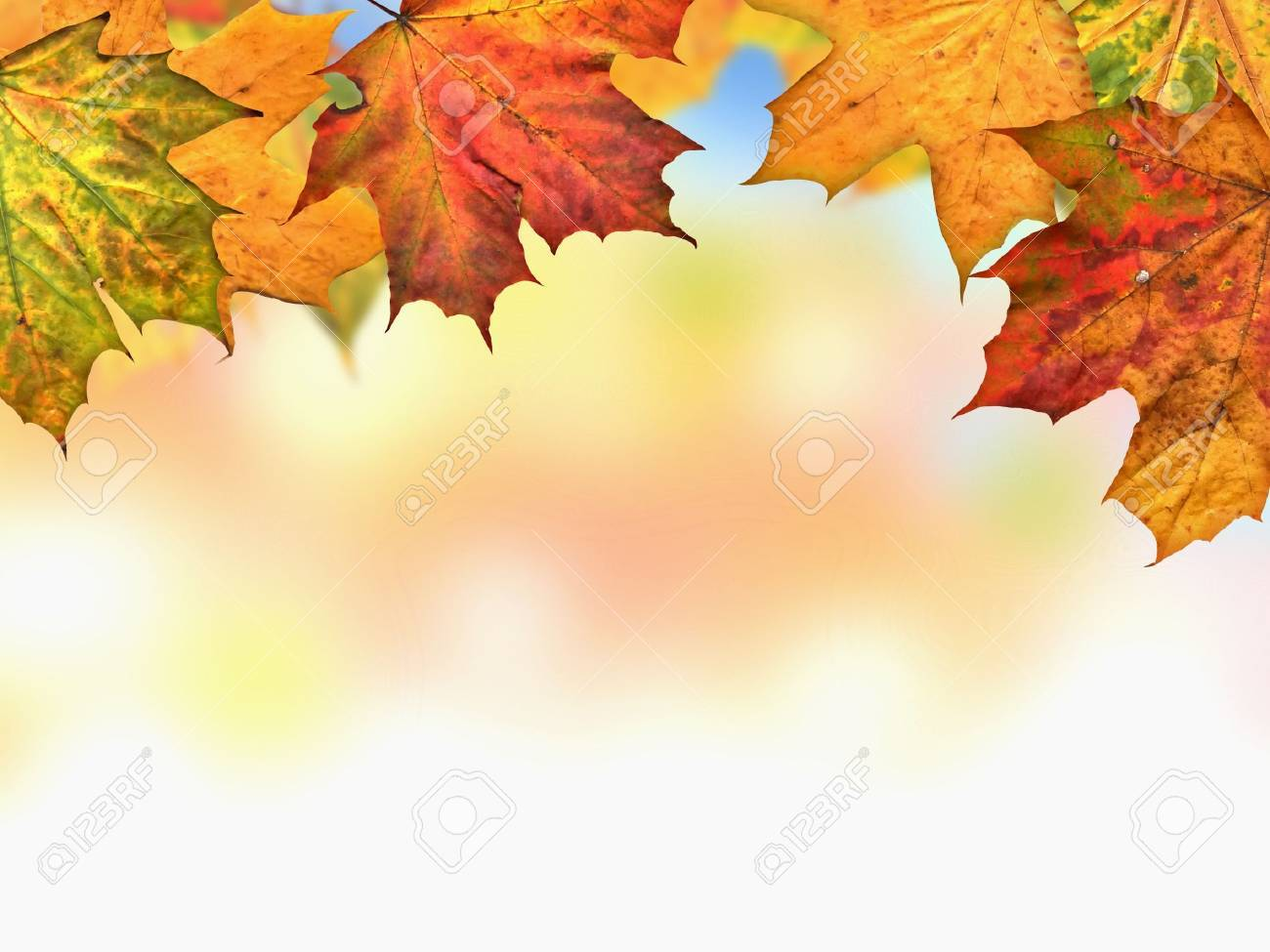 Autumn Leaves Stock Photo - 14619676