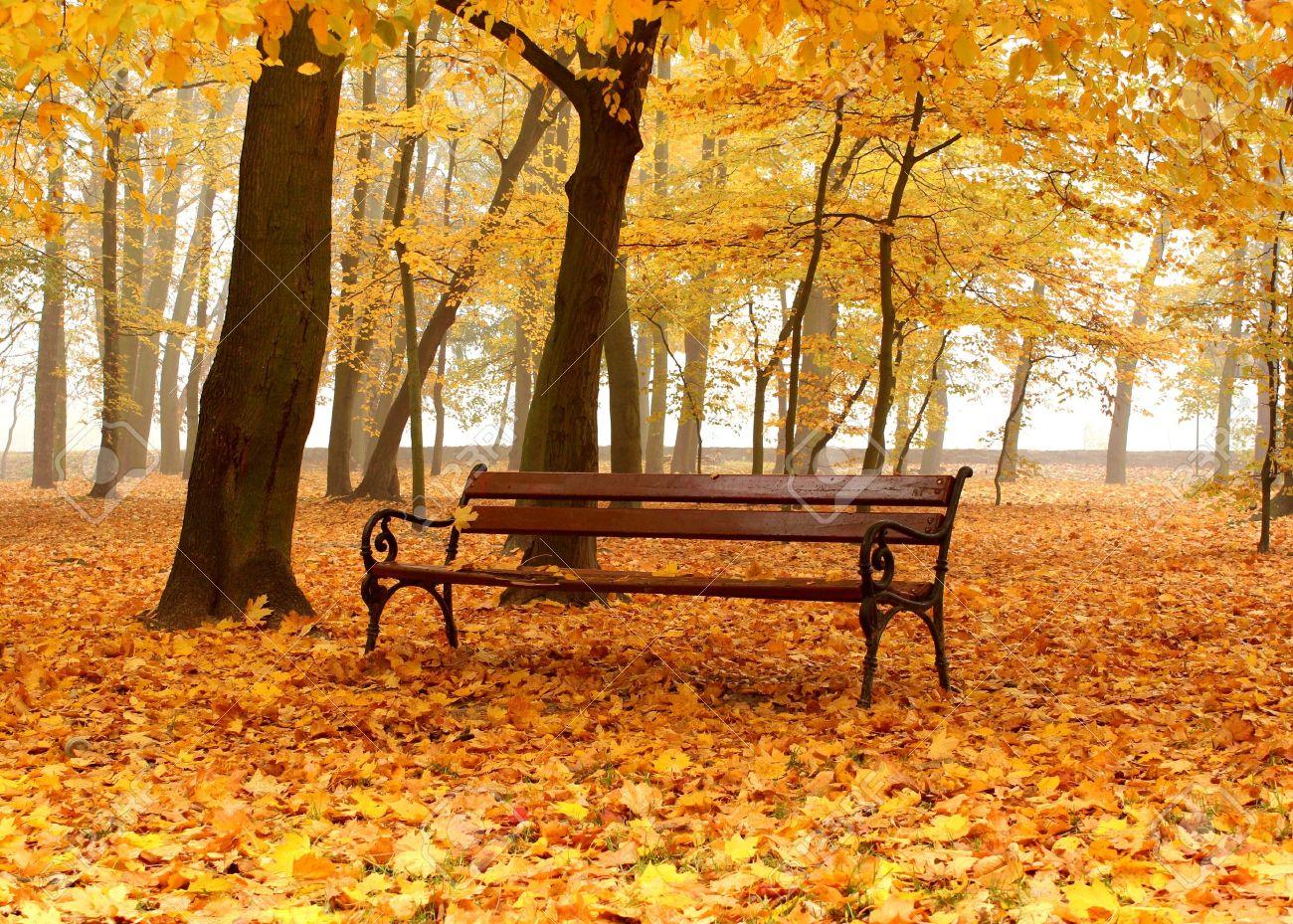 16214994-banc-dans-un-parc-automne-dor-jour-de-brouillard-Banque-d'images