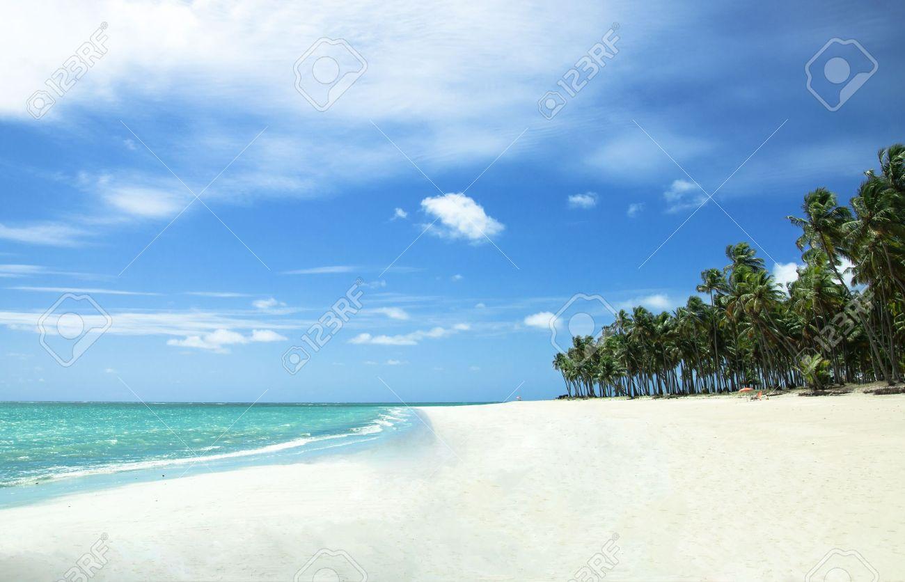 white beach sand. tropical beach with white sand in brazil stock photo 9728501