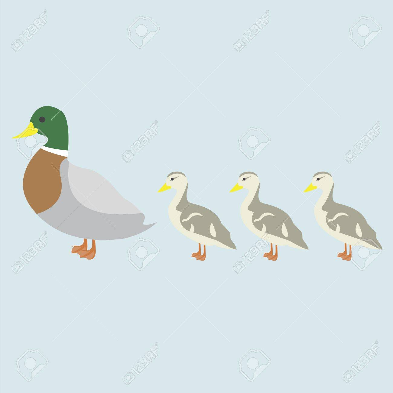 illustration of duck and 3 cute duckling royalty free cliparts