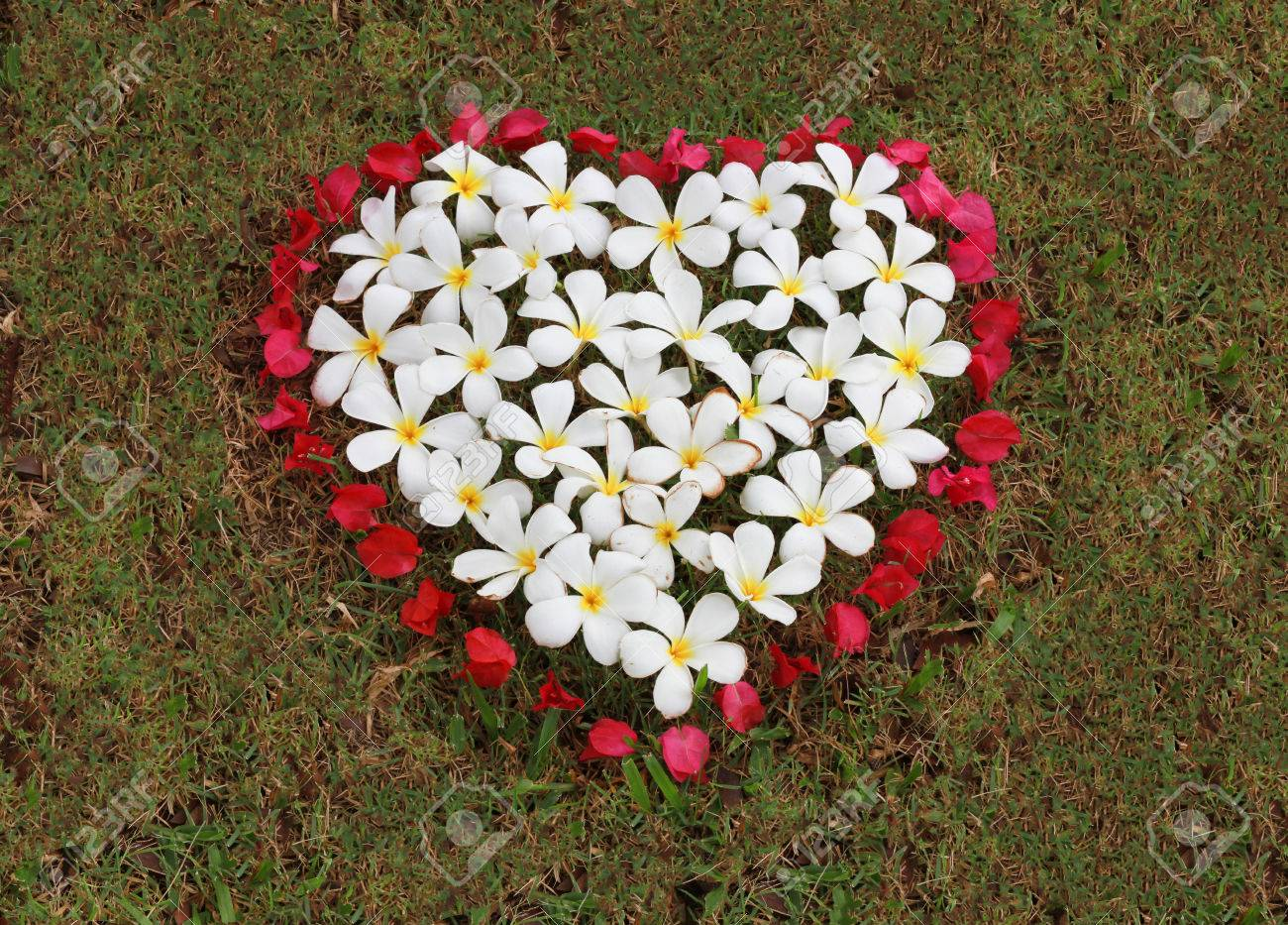 Fleur Blanche Et Fleur Rouge Sont Disposees En Forme De Coeur Sur Le
