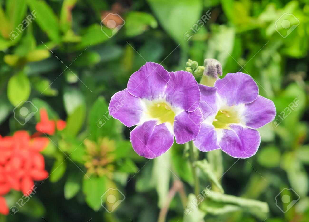 Belle Fleur Mauve Bleu Dans Le Jardin Mise Au Point Selective Avec
