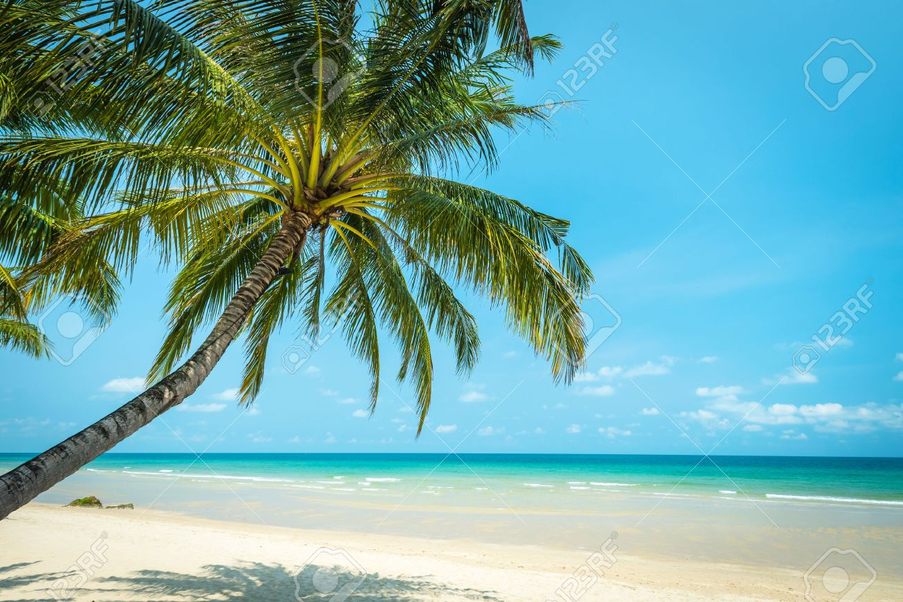 Coconut Tree Palm At The Beautiful Beach Koh Chang Island In Thailand Standard Bild