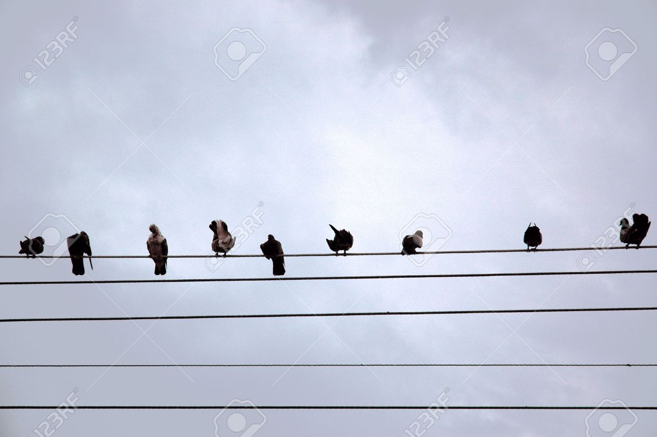 Birds Sitting Inline On A Telephone Line Stock Photo, Picture And ...