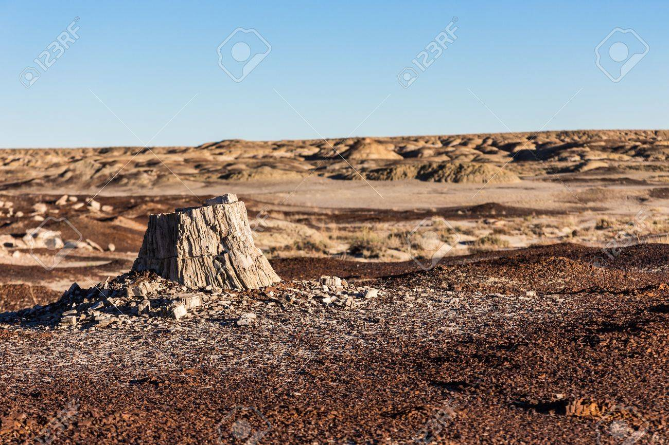 petrified wood in the desert climate change global warming stock