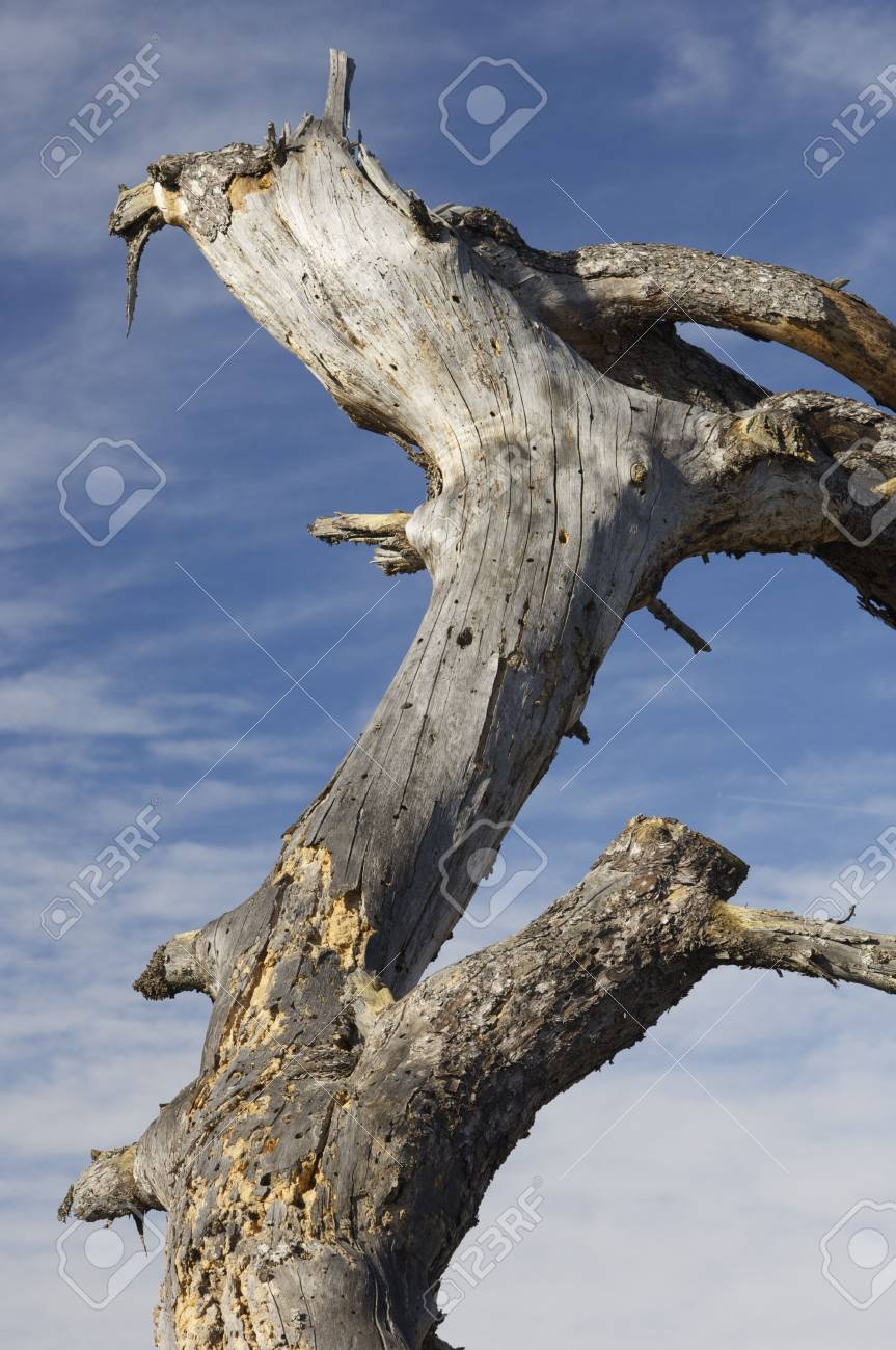 trunk of dead tree and sky; Cuenca; Spain Stock Photo - 6147841