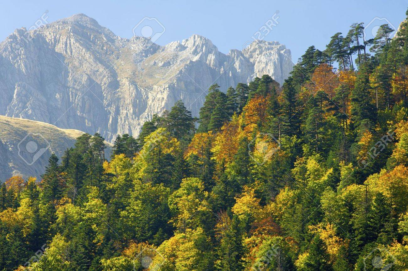 Fall forest in the Pyrenees mountains Stock Photo - 6147913