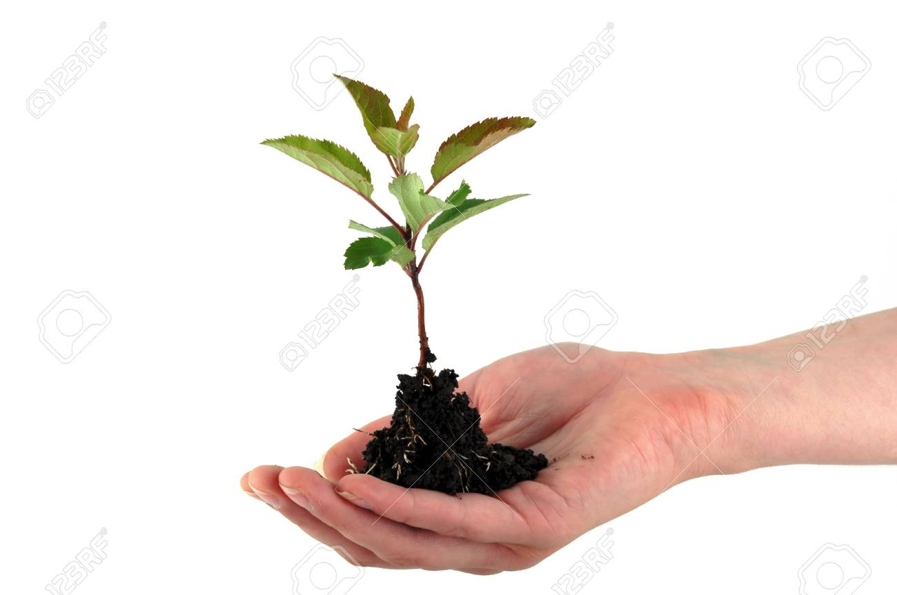 A tender seedling in front of white background Stock Photo - 4821484