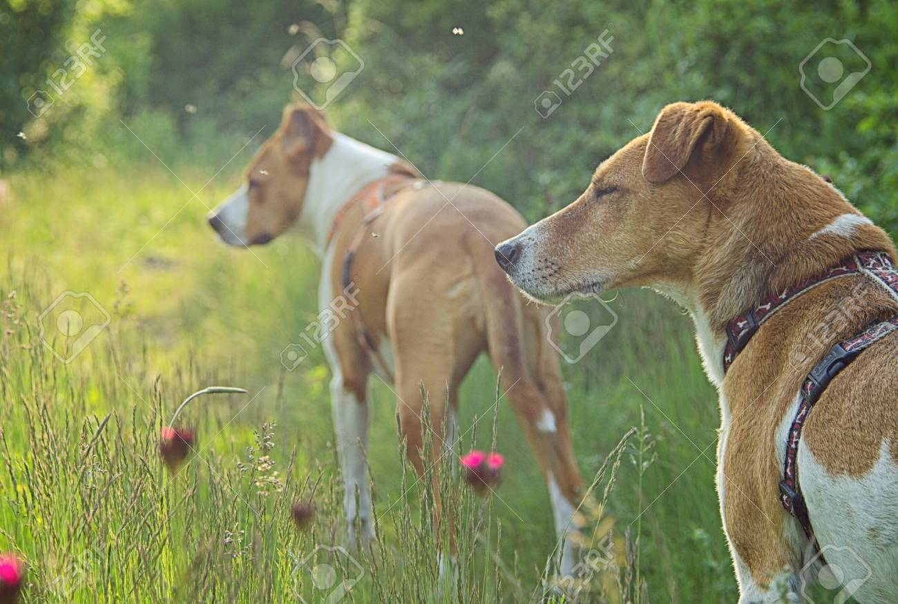 Outdoor Dogs Stock Photo Picture And Royalty Free Image Image