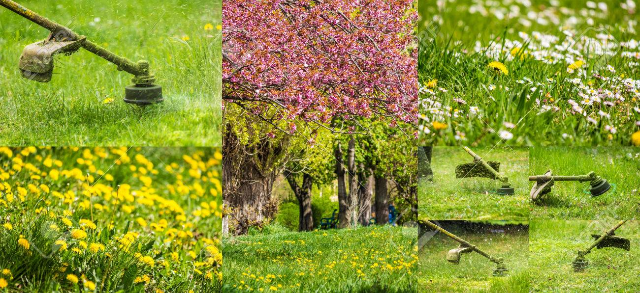 collage images work in garden and dandelion and chamomile lawn with gasoline trimmer cutting fresh green grass - 39424769