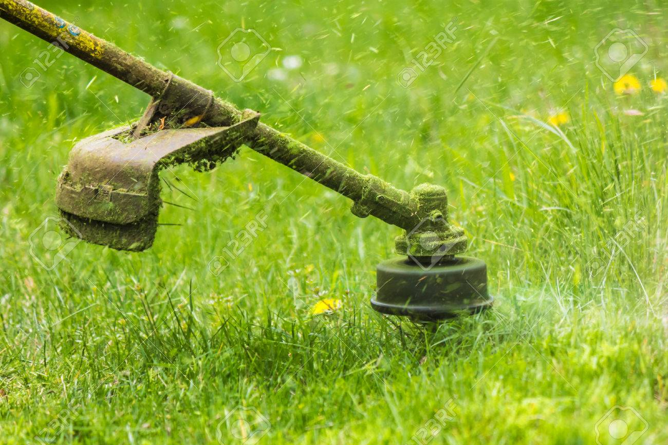 close up shot of gasoline trimmer head with nylon line cutting fresh green grass to small pieces - 39425102